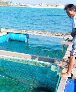 Thiết bị ngành thủy sản